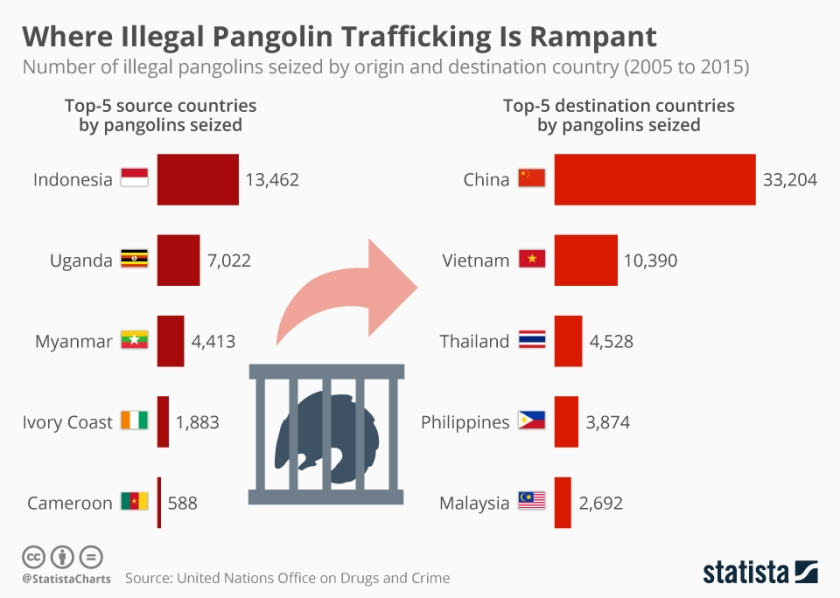 chartoftheday_17663_number_of_illegal_pangolins_seized_by_origin_and_destination_country_n