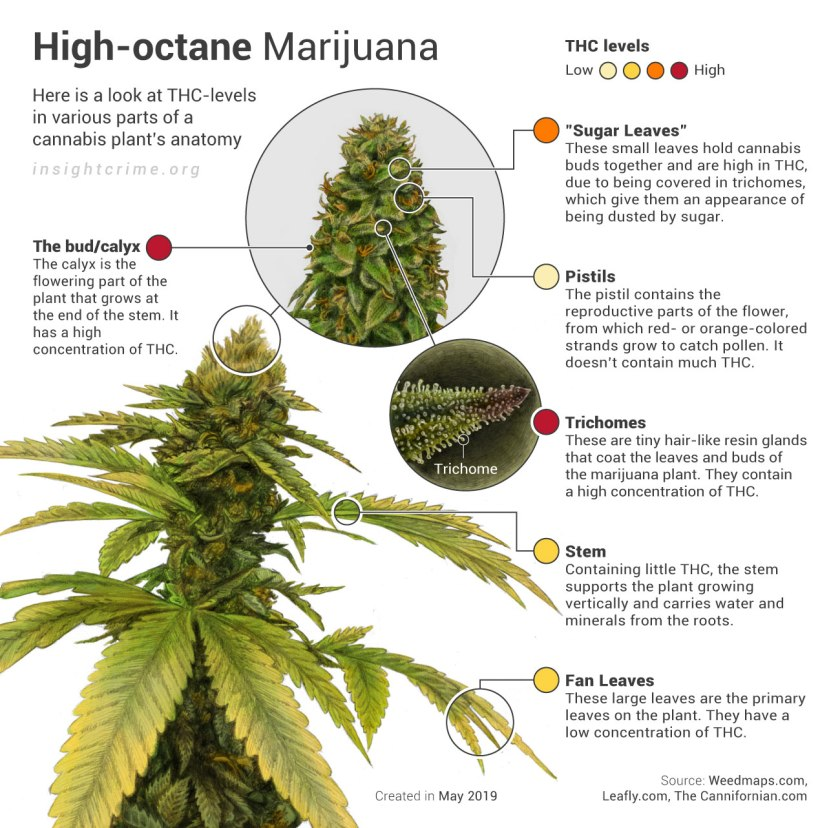 06-08-19_High-octane-Marijuana_InSight-Crime_info-2